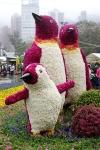 2012年香港花卉展覽 (2445 views)