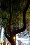 EOS 5D3 ISO Test 街景夜拍 (2286 views)
